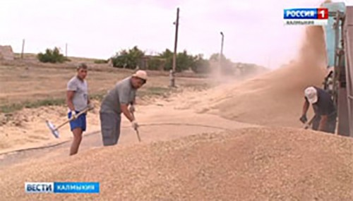 По итогам уборки зерновых собран рекордный урожай
