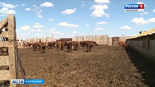 Калмыкия получит дополнительно 40 млн. рублей на поддержку сельскохозяйственной отрасли