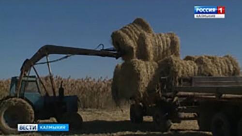 Минсельхоз проводит выездное расширенное заседание в Яшалтинском районе