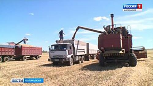 В степном регионе собрали рекордный урожай зерновых