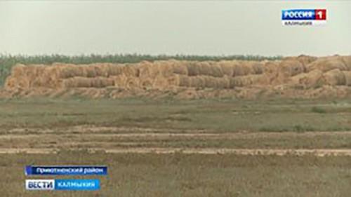 В Приютненском районе заготовлено почти 50 тысяч тонн кормов