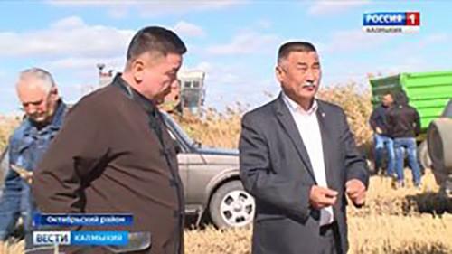 Жаркая страда в рисоводческих хозяйствах Октябрьского района