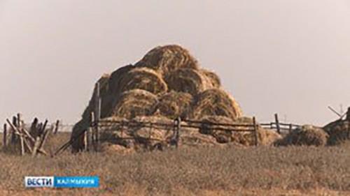 Фермеры Калмыкии получат грантовую поддержку