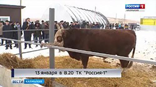 """ГТРК """"Калмыкия"""" открывает цикл передач про АПК"""