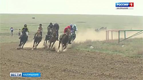 В поселке Ергенинский состоятся конно-спортивные соревнования
