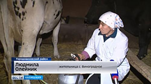 Реализация молока приносит дополнительный доход