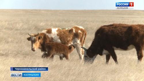 В сельхозпредприятиях республики продолжается расплодная кампания