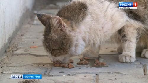 В Калмыкии зарегистрирован первый в этом году случай бешенства животных
