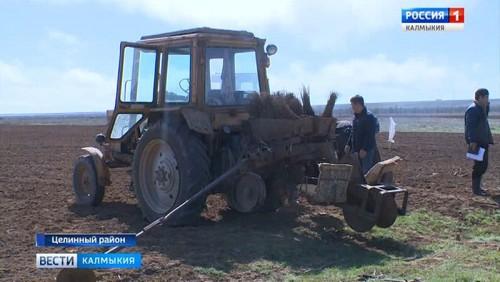 В Калмыкии предстоит высадить почти три миллиона саженцев