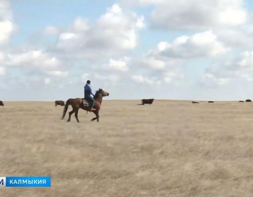 Фермеры Калмыкии получат более 200 миллионов рублей