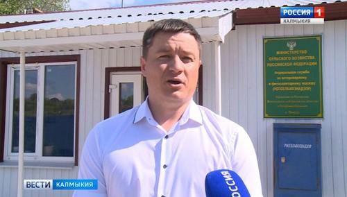 В Ростовской области обнаружили зараженную паразитами рыбу