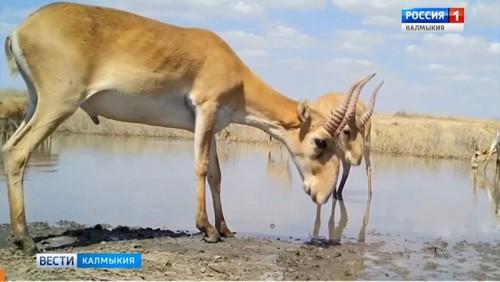 В Ханты-Мансийске стартовал 23 Международный экологический телевизионный фестиваль