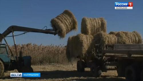 В сельхозпредприятиях Калмыкии идет заготовка грубых кормов