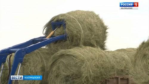 В хозяйствах Калмыкии заготовлено 65 тысяч тонн грубых кормов