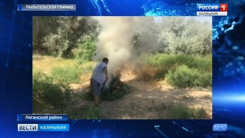 В Лаганском районе уничтожены заросли наркосодержащего растения