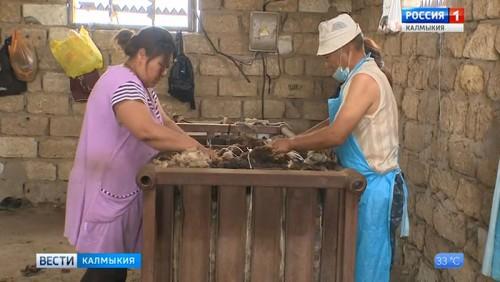 В минсельхозе предоставят субсидии на производство тонкой и полутонкой шерсти