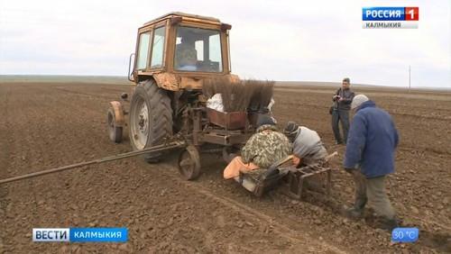 В Калмыкии высадят более 1 тысячи гектаров леса