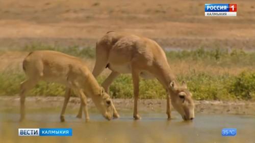 Биосферный заповедник «Черные земли» получит грант Всемирного фонда дикой природы