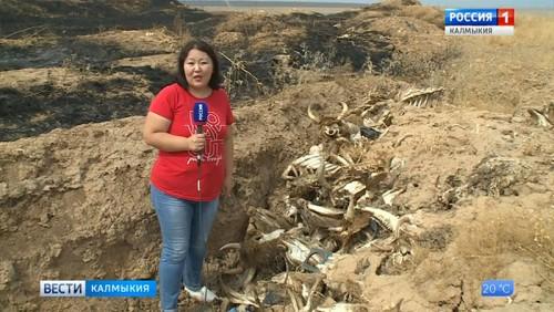В восточной промзоне Элисты горит свалка биоотходов