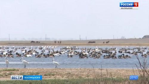 Численность колониальных видов птиц на Маныче возросла