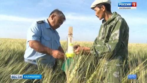 В Калмыкии ведется борьба с карантинными вредителями