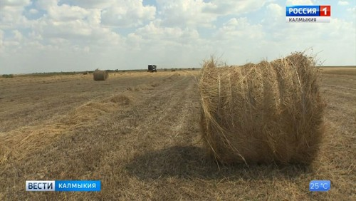 В Калмыкии идет заготовка кормов
