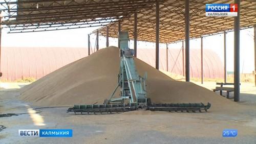 В Октябрьском районе началась уборка риса