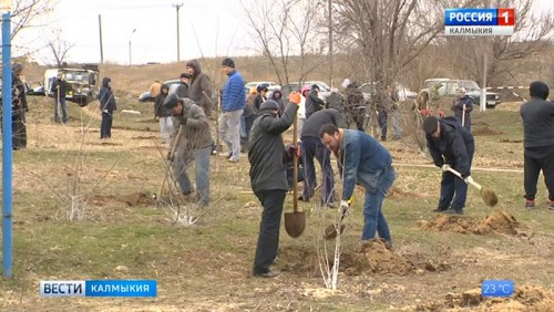 Калмыкия присоединится к всероссийской акции «Сохраним лес»