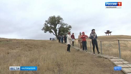 Одинокий тополь Калмыкии может стать главным деревом страны