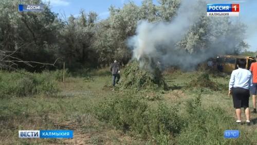 В Лаганском районе уничтожена дикорастущая конопля