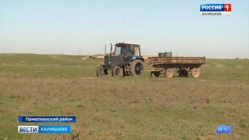 В Калмыкии идут полевые работы