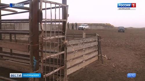 Судебные приставы арестовали четыре животноводческие стоянки