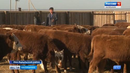 Фермеры Калмыкии защитили проекты грантовой поддержки