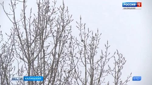В Калмыкию приходят морозы