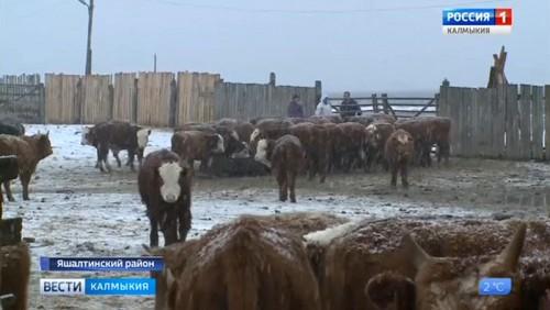 В Яшалте проводится выездное совещание специалистов министерства сельского хозяйства