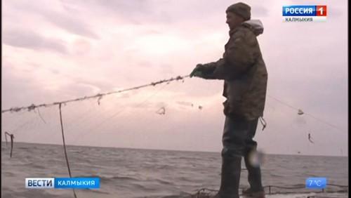 Калмыцкие рыбаки подвели итоги промысла на Каспии