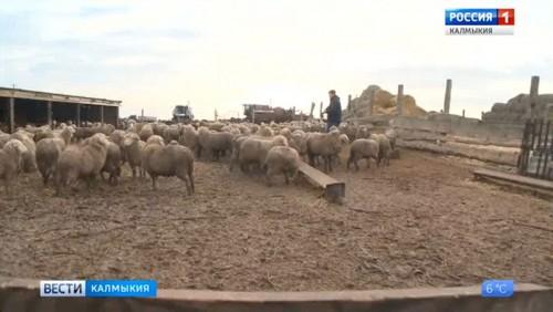 На коллегии минсельхоза рассмотрят вопросы регулирования рынков сельхозпродукции