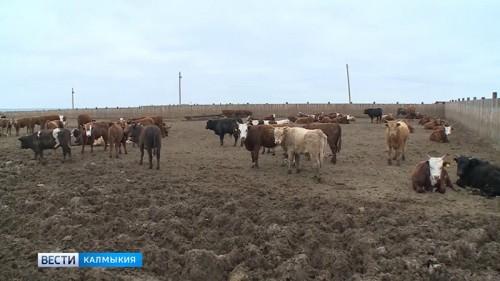 Зимовка в Калмыкии проходит в штатном режиме