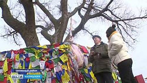 Одинокий тополь Калмыкии представляет страну на Международном конкурсе Европейское дерево года