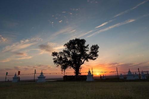 Одинокий тополь Калмыкии теряет лидерство в голосовании за главное Европейское дерево года