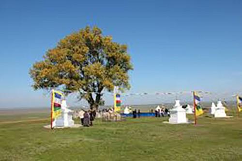 Одинокий тополь находится на 3 месте конкурса на звание «Европейское дерево года»