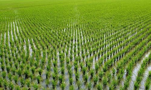 Глава региона Бату Хасиков провел рабочее совещание, посвященное вопросам рисоводческой отрасли республики