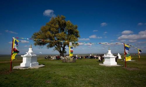 Сегодня мы узнаем победителя конкурса «Европейское дерево года»