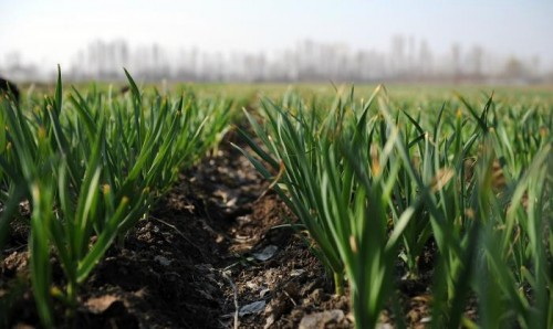 Весенне-полевые работы в Калмыкии завершились раньше срока