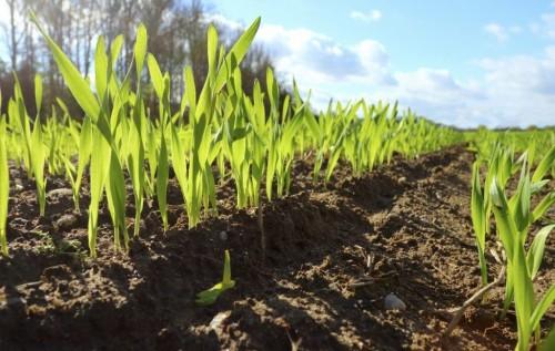 Неустойчивая погода может погубить урожай. Как обстоят дела в районах республики?