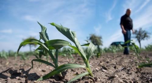 Фермеры региона обеспокоены отсутствием осадков