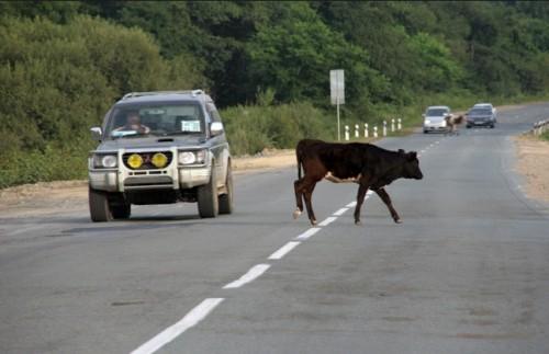 «Электронные пастухи» на страже безопасности дорожного движения
