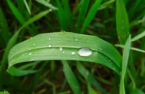 Аграрии региона уповают на дождливый май