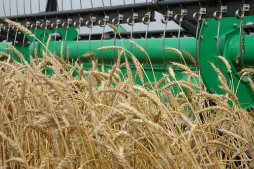 Сельхозтоваропроизводителям Калмыкии окажут господдержку