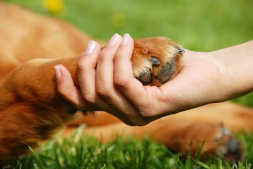 Поправки в главный документ страны помогут защитить животных